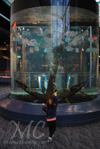 Traveling With Kids Ripley 39 S Aquarium Of The Smokies In