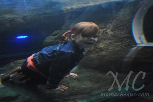 ripleys aquarium of the smokies c