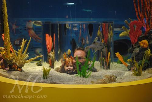 ripleys aquarium of the smokies d
