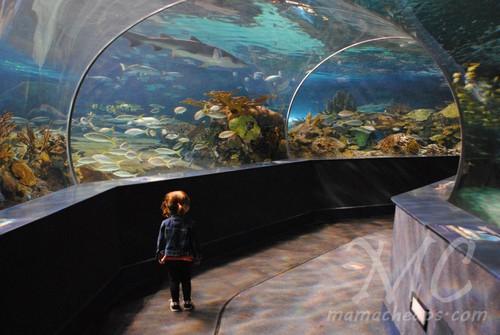ripleys aquarium of the smokies f