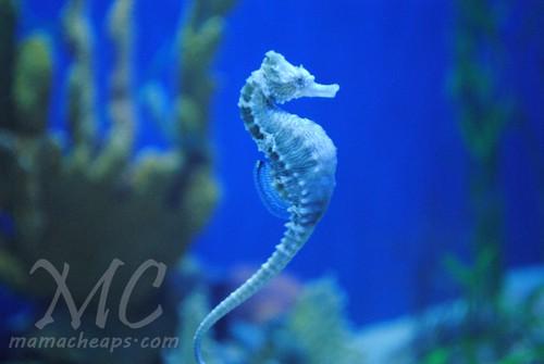 ripleys aquarium of the smokies g