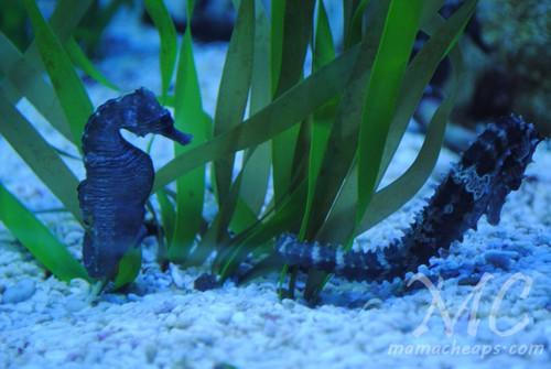 ripleys aquarium of the smokies k