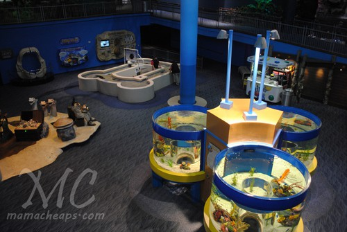 ripleys aquarium of the smokies l