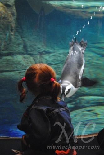ripleys aquarium of the smokies o