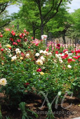 Rose Kennedy Garden Boston