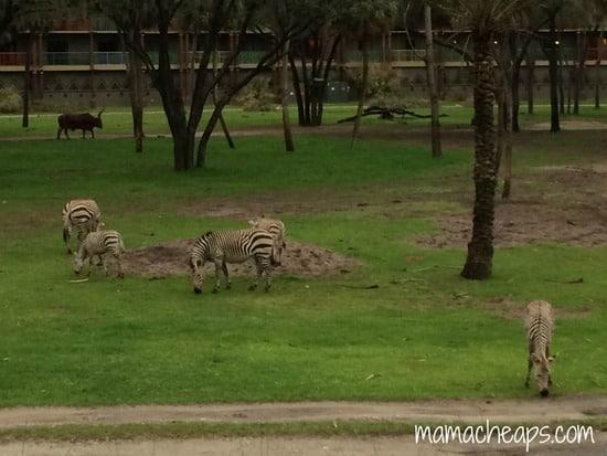 disney world animal kingdom lodge kidani village deluxe studio villa savanna view zebra b