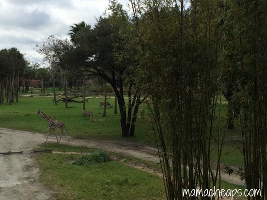 disney world animal kingdom lodge kidani village savanna view f
