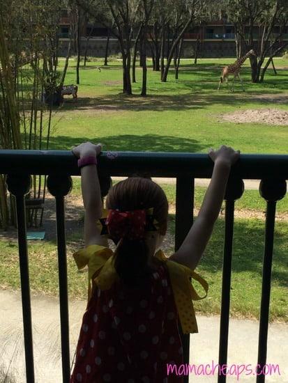 disney world animal kingdom lodge kidani village savanna view watching giraffes