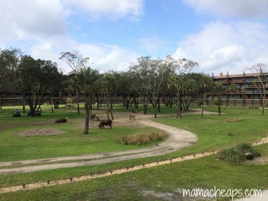 disney world animal kingdom lodge kidani village savanna view