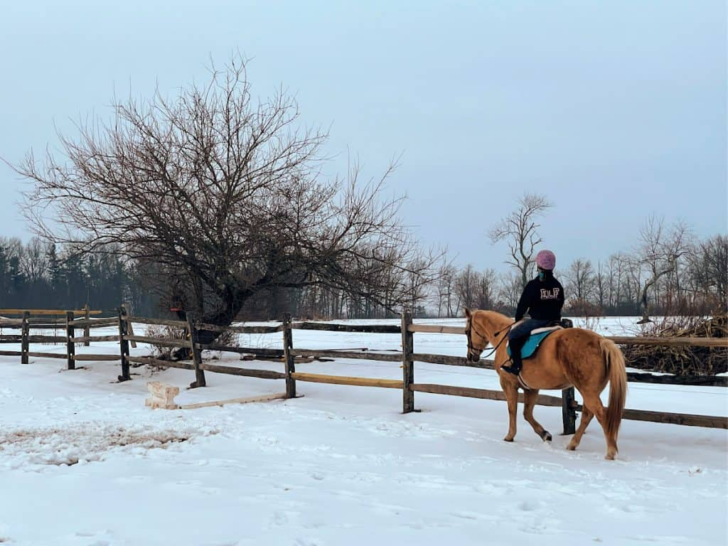Riding horse in snow field