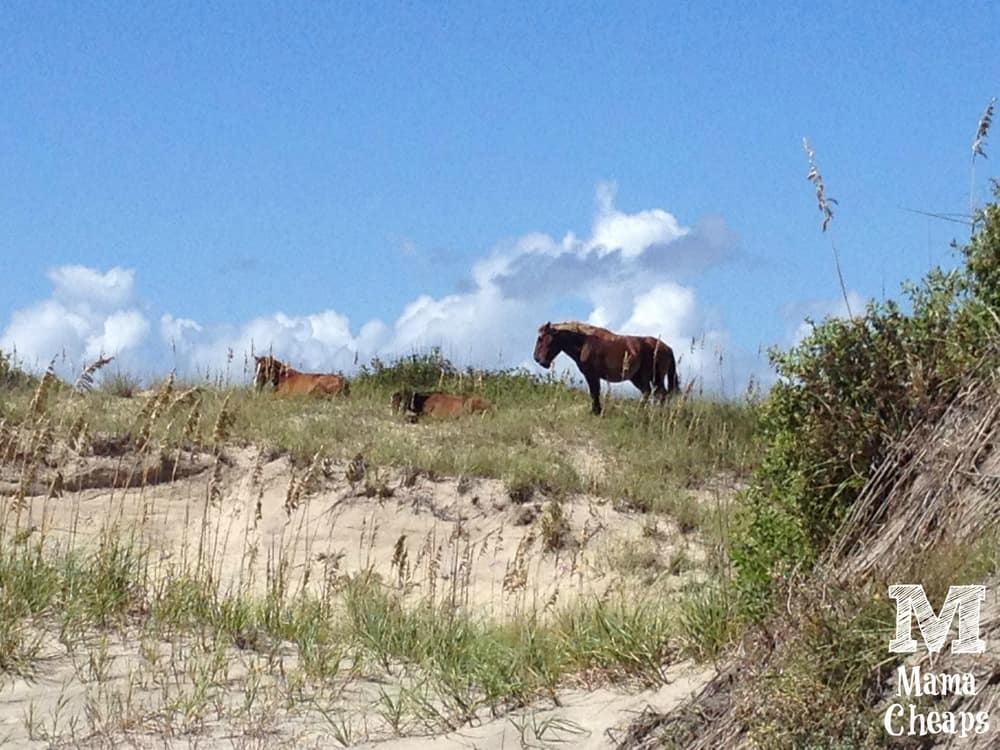 Wild Horses Corolla Outer Banks