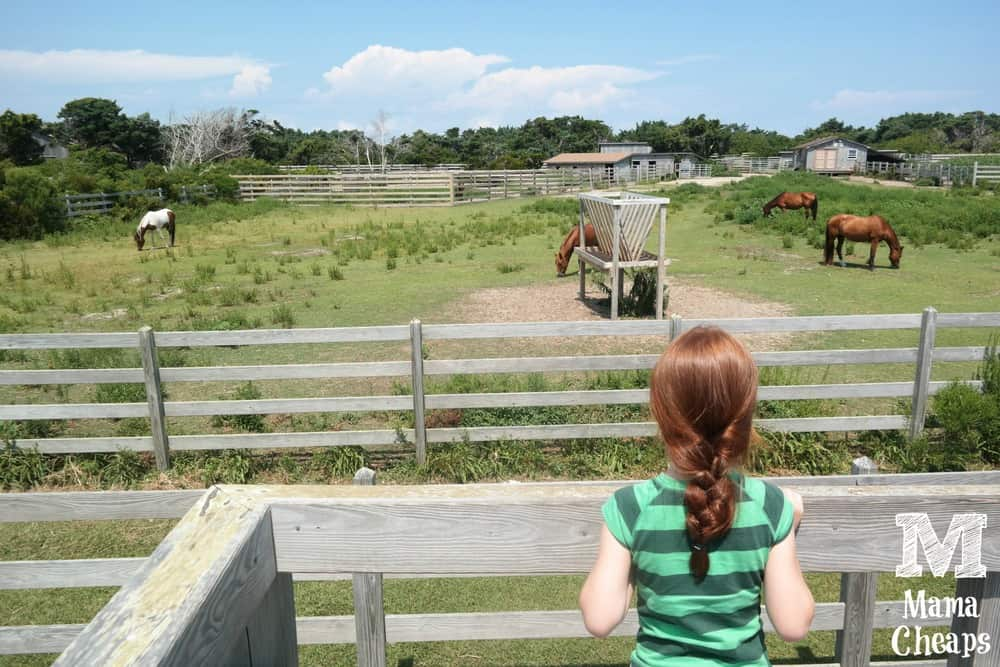 Wild Mustangs Ocracoke Outer banks