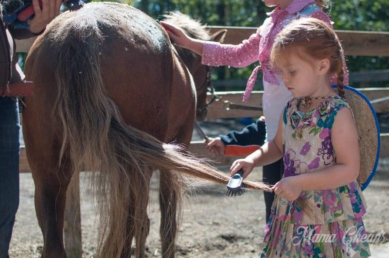 Grooming Pony