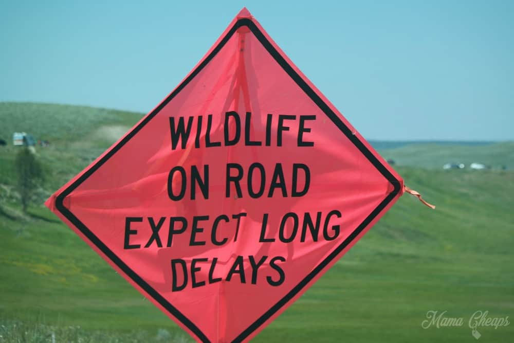 Yellowstone Wildlife Sign