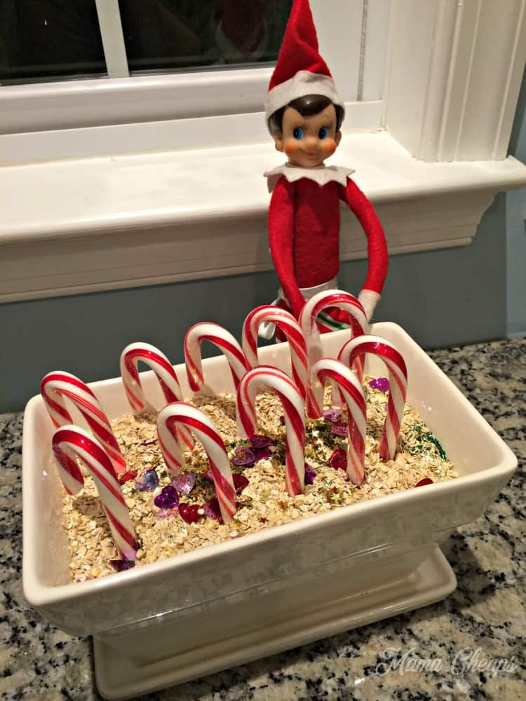 Elf Magic Candy Cane Garden