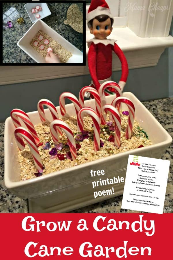 Grow a Candy Cane Garden PIN