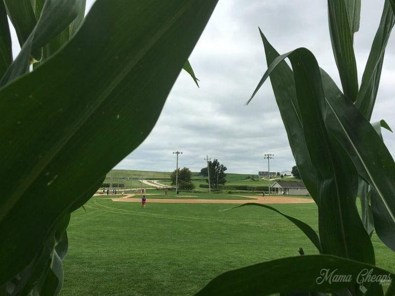 Inside Corn Field Dyersville