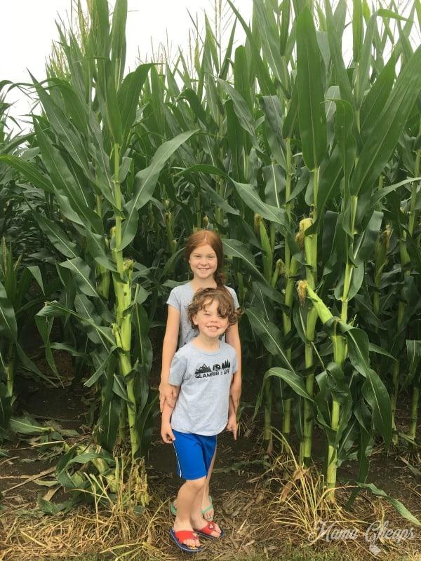 Walking In Field of Dreams Corn
