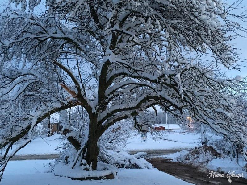 Broken Tree Snow