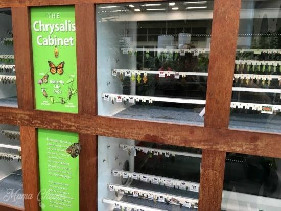 Chrysalis Cabinet