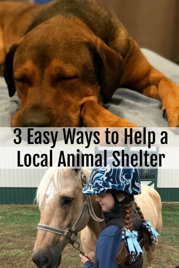 3 Easy Ways to Help a Local Animal Shelter PIN 2