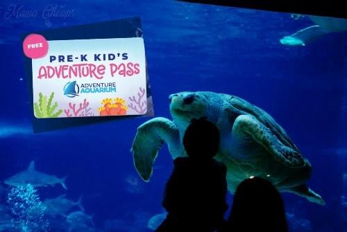 adventure aquarium pass with turtle