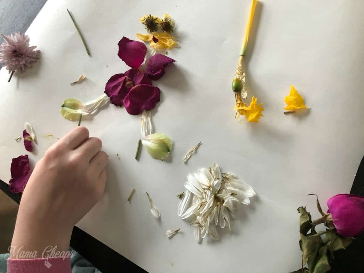 Lily Flower Picture Making
