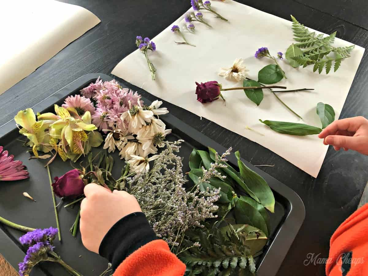 Making flower portraits 2